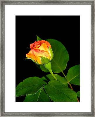 Framed Print featuring the photograph To My Beloved by Ester  Rogers