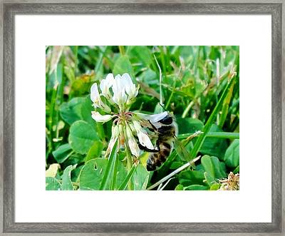 To Stop And Smell A Flower Framed Print by Katie Bauer