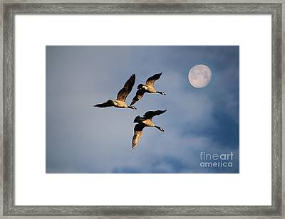 To The Moon And Back Framed Print by Marjorie Imbeau