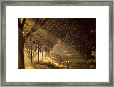 To The Shire Framed Print by Studio Yuki