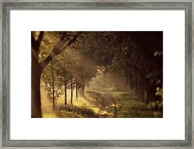To The Shire Framed Print by Studio Yuki