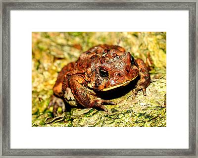 Framed Print featuring the photograph Toad by Joe  Ng