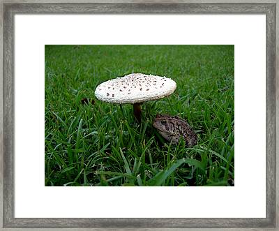 Toad N Stool Framed Print by Skip Willits