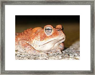 Toad You So Framed Print