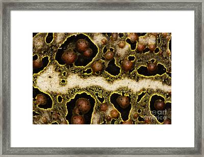 Toadally Up Close Framed Print