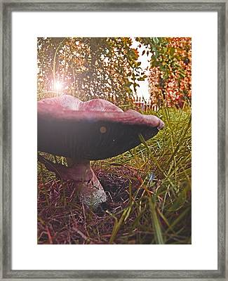 Toadstool Framed Print by Robin Cox