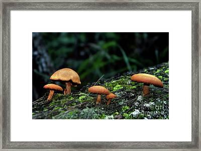 Toadstool Village Framed Print by Kaye Menner