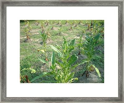 Tobacco Addiction Framed Print