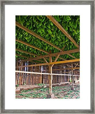 Tobacco Framed Print