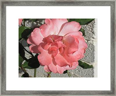 Today It's Pink Framed Print