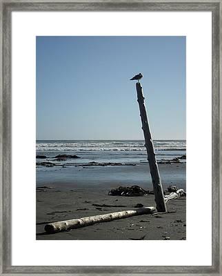 Tofino Framed Print