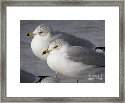 Togetherness Framed Print by Judy Via-Wolff