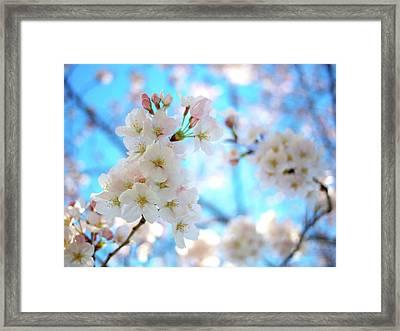 Tokyo, Sakura Framed Print by Takahiro Yamamoto