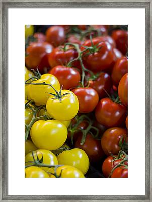 Tomatoes On The Vine Framed Print by Heather Applegate