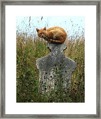 Tombstone Cat Framed Print by Still Watters