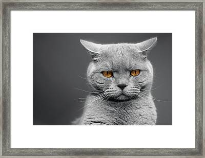 Tommy The Grumpy Framed Print
