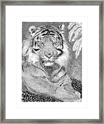 Tony The Tiger Framed Print by Jack Pumphrey
