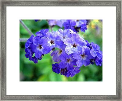 Too Blue Framed Print