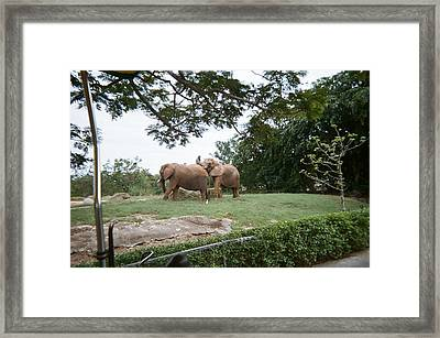 Too Close For Comfort Framed Print by Val Oconnor