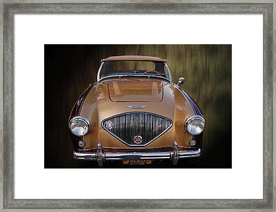 Tootone Healey Framed Print by Bill Dutting