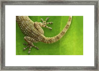 Top Reptile Framed Print by Izlemus