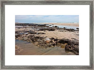 Topsail Sponge-land Framed Print by Betsy Knapp