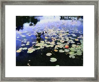Torch River Water Lilies 3.0 Framed Print