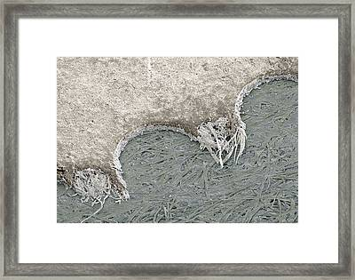 Torn Postage Stamp, Sem Framed Print by Power And Syred