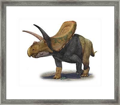 Torosaurus Latus, A Prehistoric Era Framed Print by Sergey Krasovskiy
