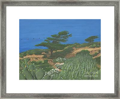 Torrey Pines And Pelicans Framed Print