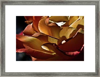 Torrid Framed Print by Monroe Snook
