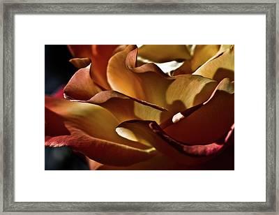 Torrid Framed Print by Monroe Snook