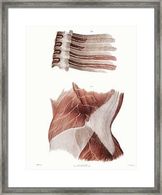 Torso Nerves Framed Print