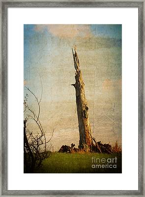Totem Framed Print by Mary Machare