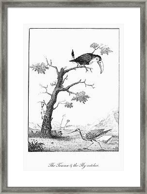 Toucan And Flycatcher Framed Print by Granger