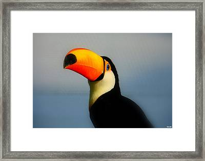 Toucan (ramphastos Toco) Framed Print by T. Vossinakis, Paros island, Greece