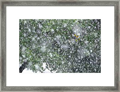 Touch Of Color Framed Print by JAMART Photography