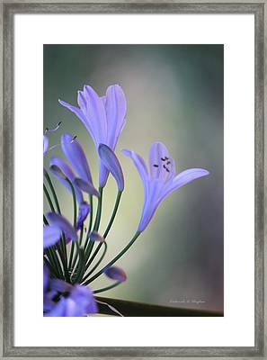Touch Of Light Framed Print