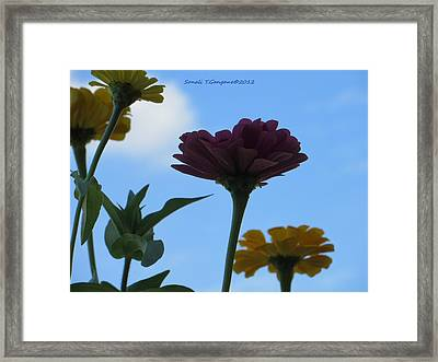 Touch Of Sky Framed Print by Sonali Gangane