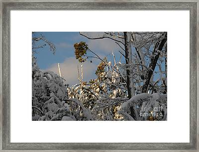 Touch Of Sun Framed Print by Linda Seacord