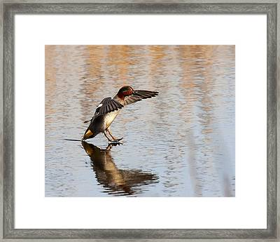 Framed Print featuring the photograph Touchdown by Paul Scoullar