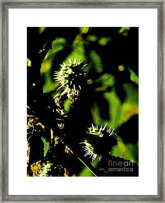 Framed Print featuring the photograph Touched By The Late Afternoon Sun by Steve Taylor