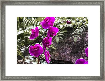 Touched Framed Print by Nicholas Evans