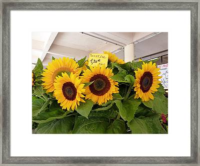 Tournesol Framed Print by Carla Parris