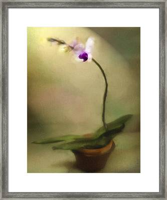 Toward The Light Framed Print by Jill Balsam