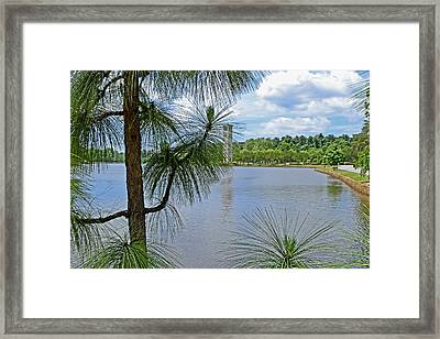 Tower Thru The Pine Framed Print