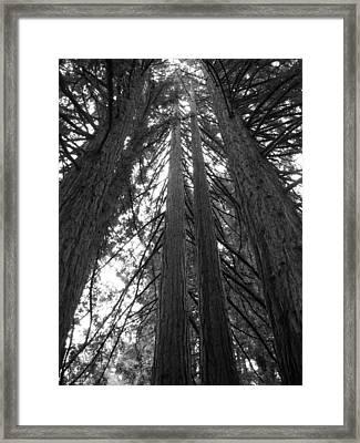 Towering Giants Framed Print