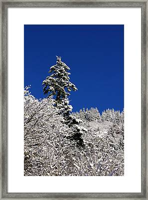 Towering Tree On Snow Covered Mountain Framed Print