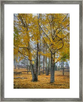 Towers Of Gold Framed Print by Ken Smith