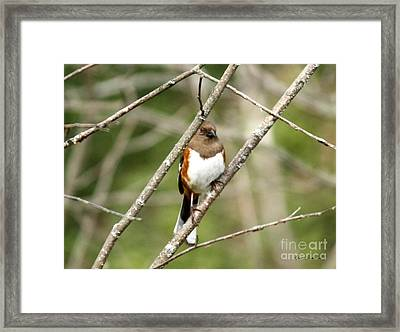 Towhee Female Framed Print by Yumi Johnson